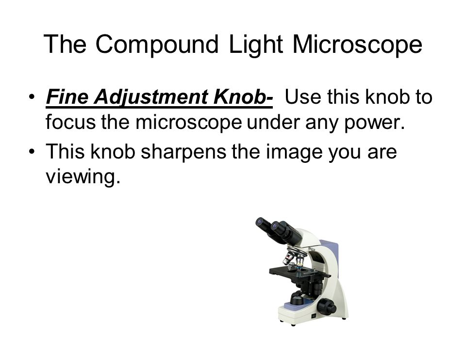 The Compound Light Microscope Fine Adjustment Knob- Use this knob to focus the microscope under any power. This knob sharpens the image you are viewin