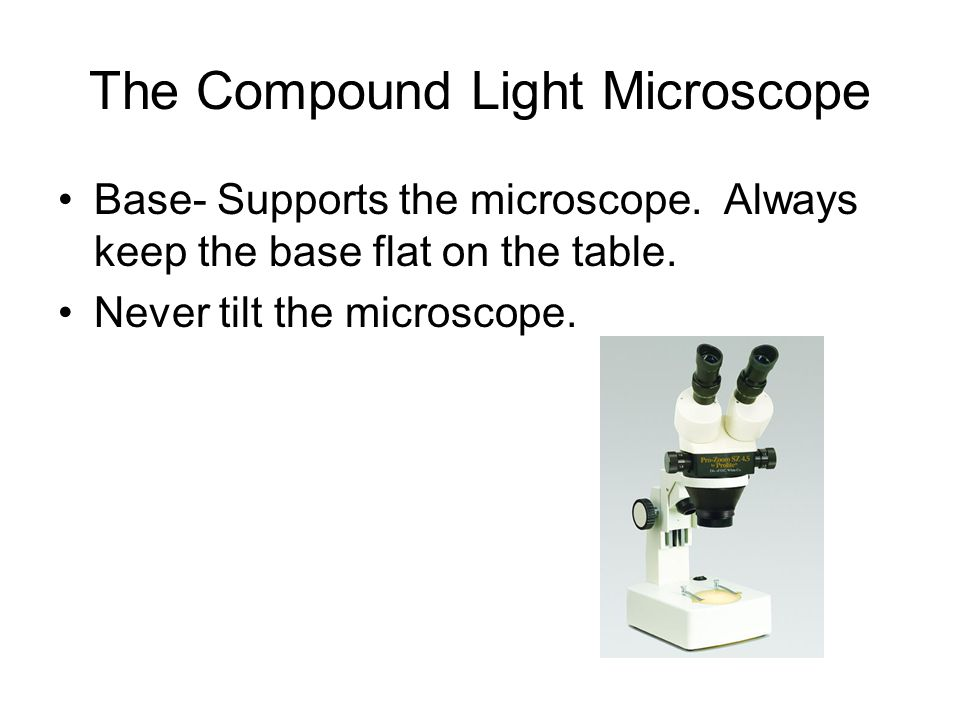 The Compound Light Microscope Base- Supports the microscope.