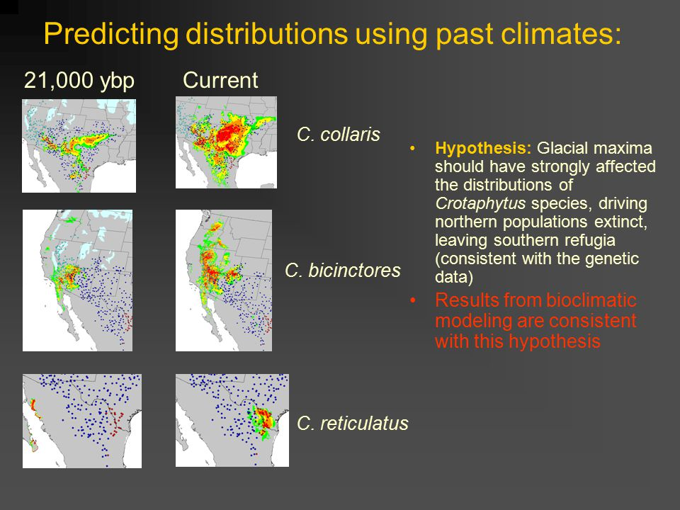 Predicting distributions using past climates: Hypothesis: Glacial maxima should have strongly affected the distributions of Crotaphytus species, driving northern populations extinct, leaving southern refugia (consistent with the genetic data) Results from bioclimatic modeling are consistent with this hypothesis Current C.