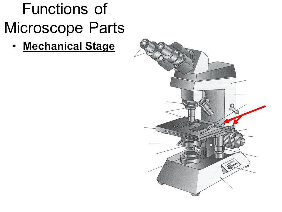 Functions of Microscope Parts Mechanical Stage