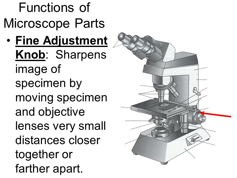 Functions of Microscope Parts Fine Adjustment Knob: Sharpens image of specimen by moving specimen and objective lenses very small distances closer together or farther apart.