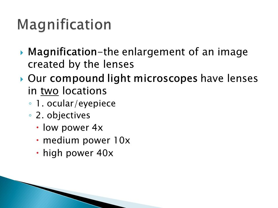  Magnification-the enlargement of an image created by the lenses  Our compound light microscopes have lenses in two locations ◦ 1.