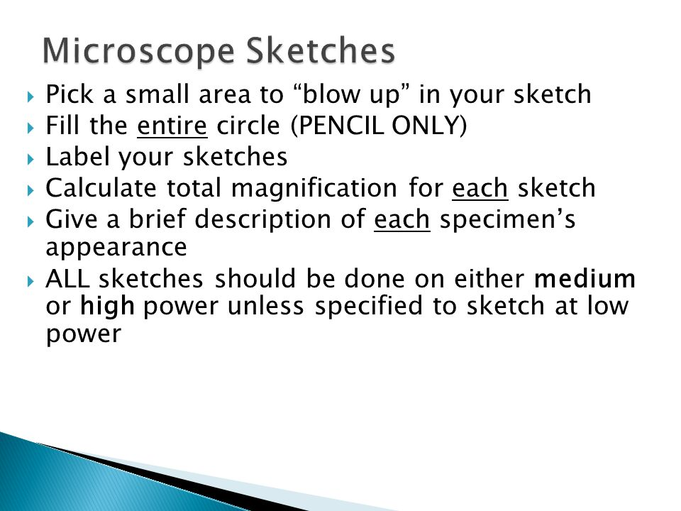  Pick a small area to blow up in your sketch  Fill the entire circle (PENCIL ONLY)  Label your sketches  Calculate total magnification for each sketch  Give a brief description of each specimen's appearance  ALL sketches should be done on either medium or high power unless specified to sketch at low power