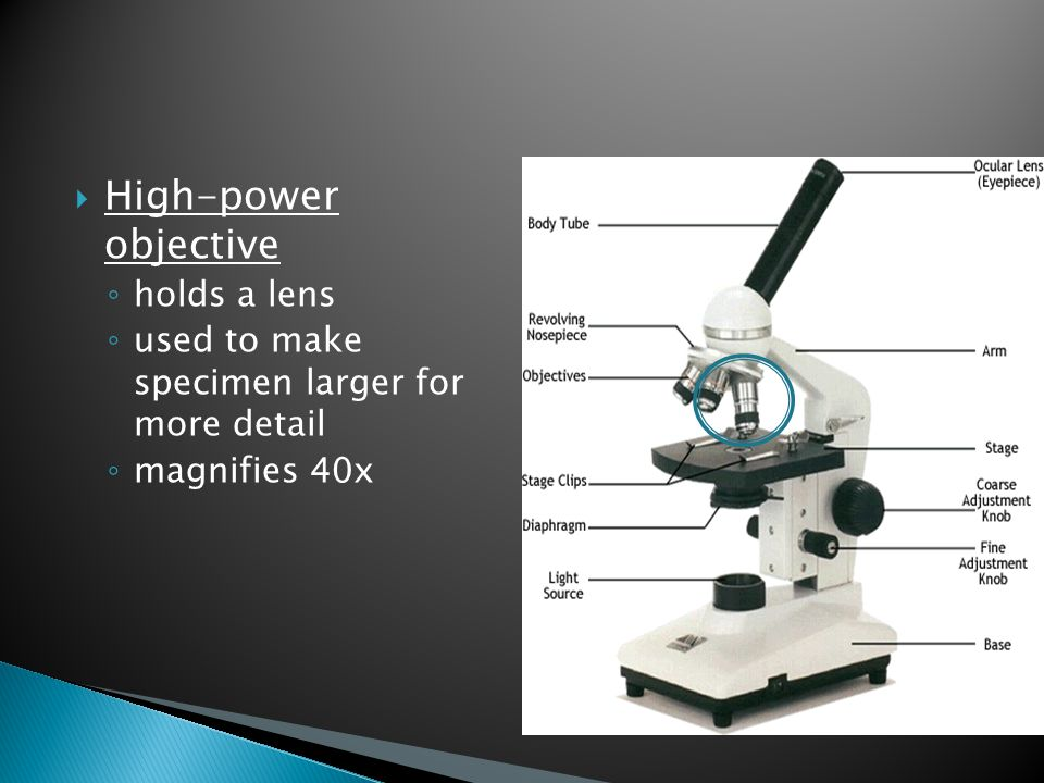  High-power objective ◦ holds a lens ◦ used to make specimen larger for more detail ◦ magnifies 40x