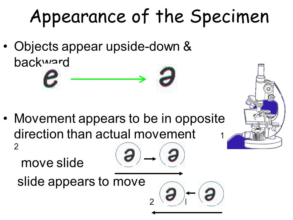 Appearance of the Specimen Objects appear upside-down & backward Movement appears to be in opposite direction than actual movement 1 2 move slide slid