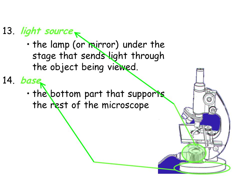 13. light source the lamp (or mirror) under the stage that sends light through the object being viewed. 14. base the bottom part that supports the res