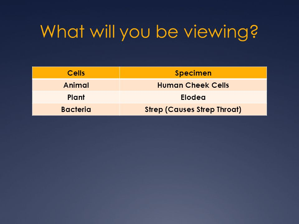 What will you be viewing? CellsSpecimen AnimalHuman Cheek Cells PlantElodea BacteriaStrep (Causes Strep Throat)