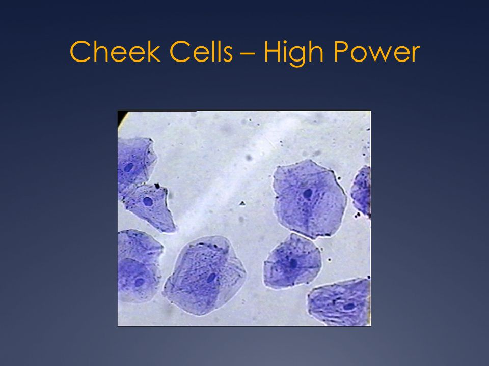 Cheek Cells – High Power