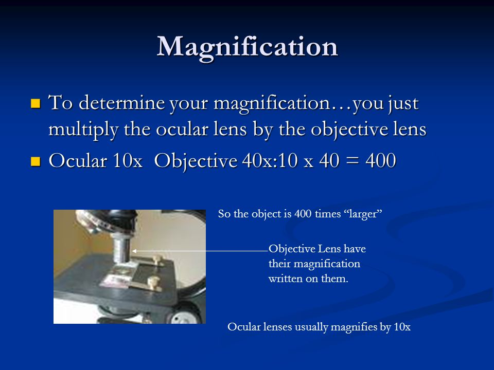Magnification To determine your magnification…you just multiply the ocular lens by the objective lens To determine your magnification…you just multiply the ocular lens by the objective lens Ocular 10x Objective 40x:10 x 40 = 400 Ocular 10x Objective 40x:10 x 40 = 400 Objective Lens have their magnification written on them.