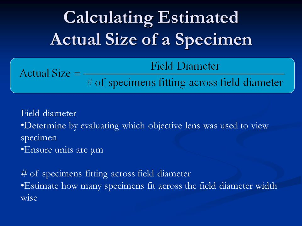 Calculating Estimated Actual Size of a Specimen Field diameter Determine by evaluating which objective lens was used to view specimen Ensure units are μm # of specimens fitting across field diameter Estimate how many specimens fit across the field diameter width wise