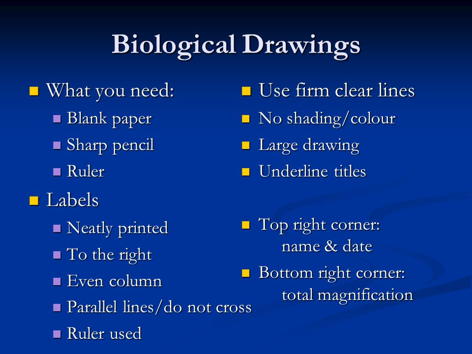 Biological Drawings What you need: What you need: Blank paper Blank paper Sharp pencil Sharp pencil Ruler Ruler Labels Labels Neatly printed Neatly printed To the right To the right Even column Even column Parallel lines/do not cross Parallel lines/do not cross Ruler used Ruler used Use firm clear lines Use firm clear lines No shading/colour No shading/colour Large drawing Large drawing Underline titles Underline titles Top right corner: name & date Top right corner: name & date Bottom right corner: total magnification Bottom right corner: total magnification