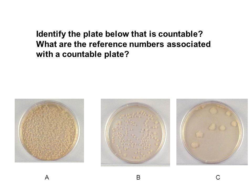 Identify the plate below that is countable.