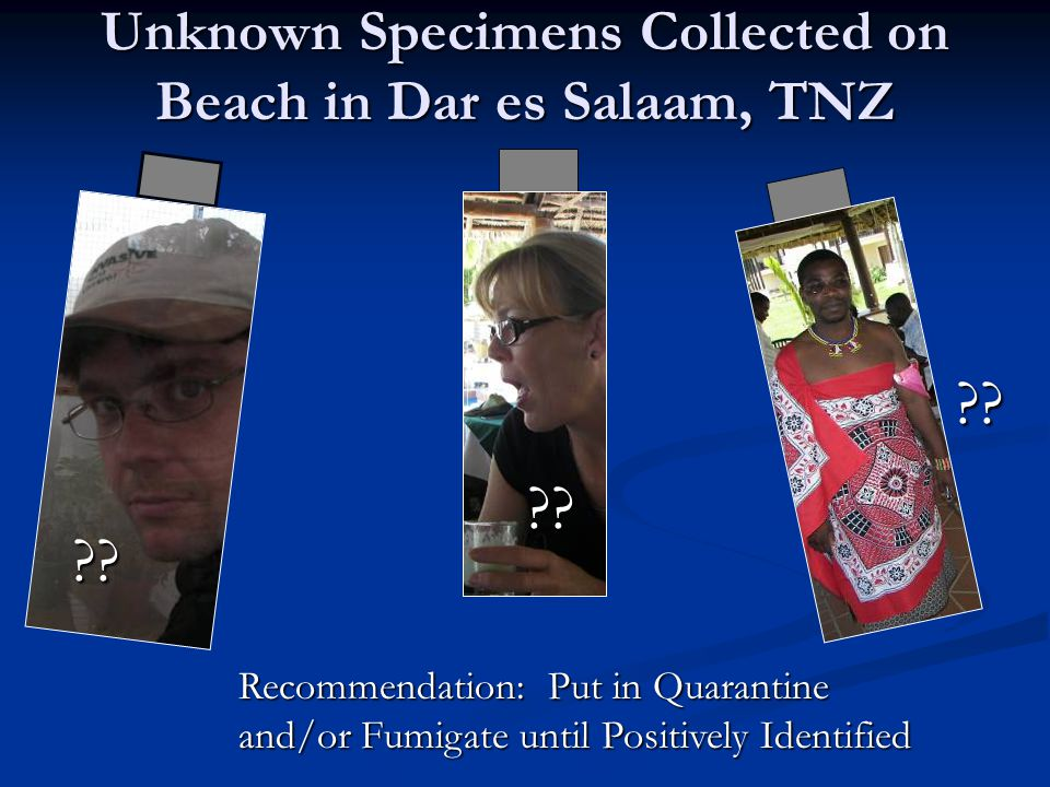 Unknown Specimens Collected on Beach in Dar es Salaam, TNZ ?.