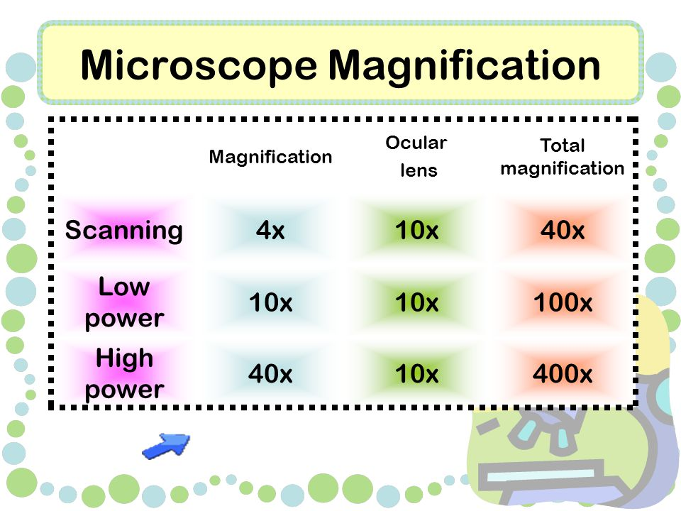 Microscope Magnification Magnification Ocular lens Total magnification Scanning4x10x40x Low power 10x 100x High power 40x10x400x