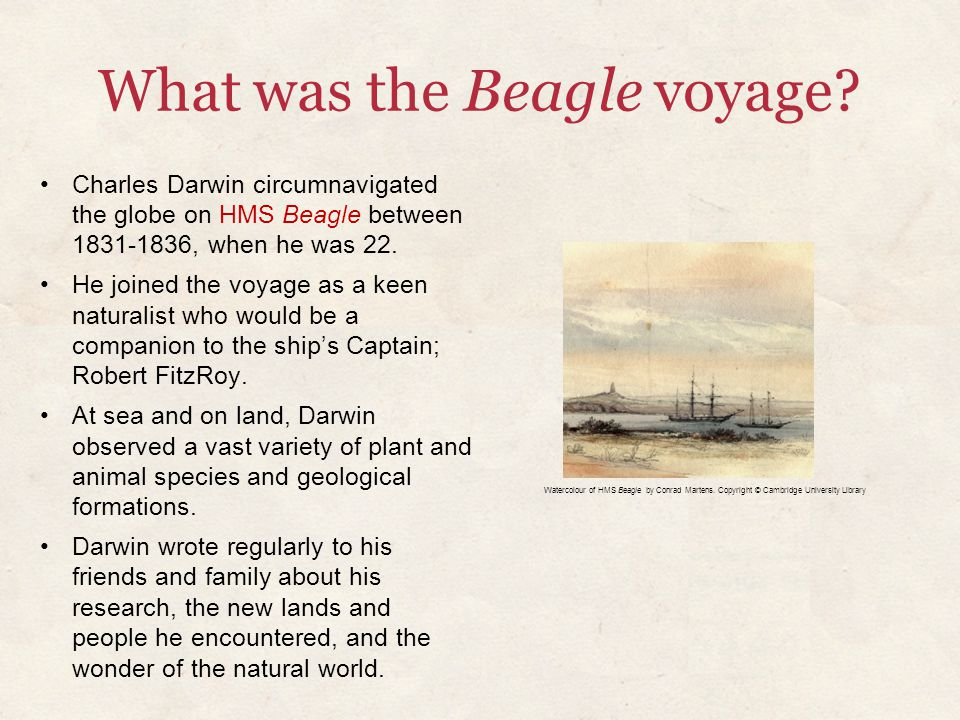What was the Beagle voyage? Charles Darwin circumnavigated the globe on HMS Beagle between 1831-1836, when he was 22. He joined the voyage as a keen n