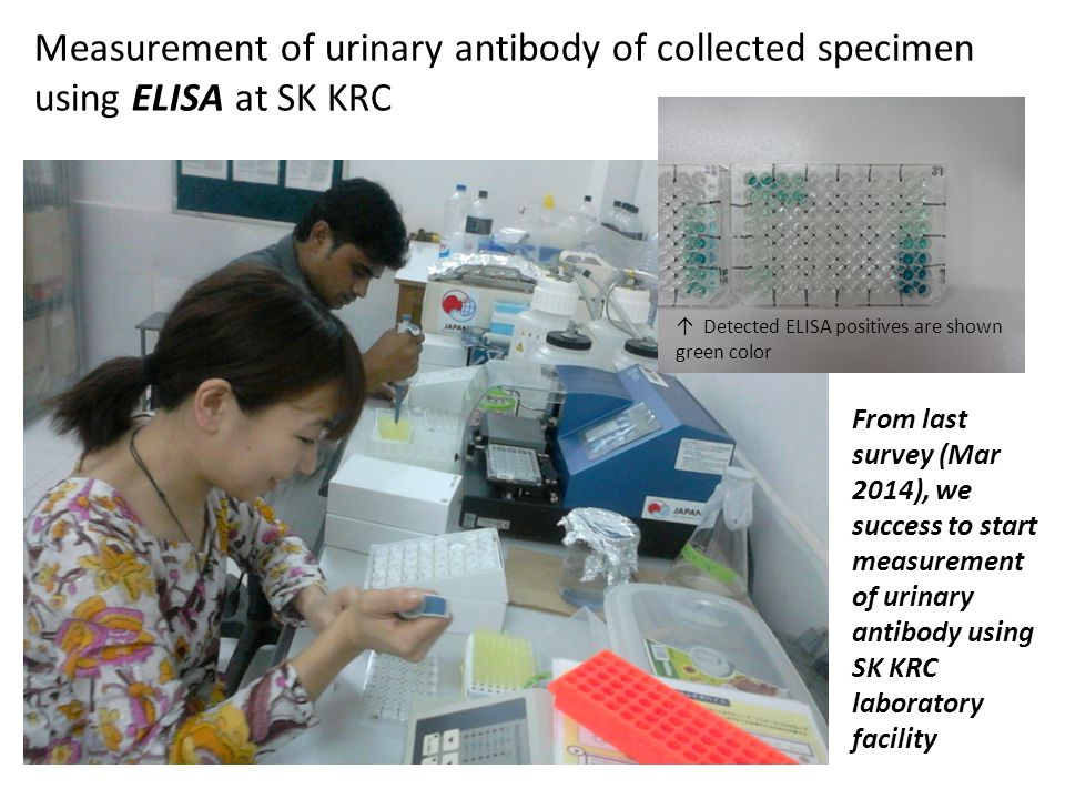Measurement of urinary antibody of collected specimen using ELISA at SK KRC From last survey (Mar 2014), we success to start measurement of urinary an
