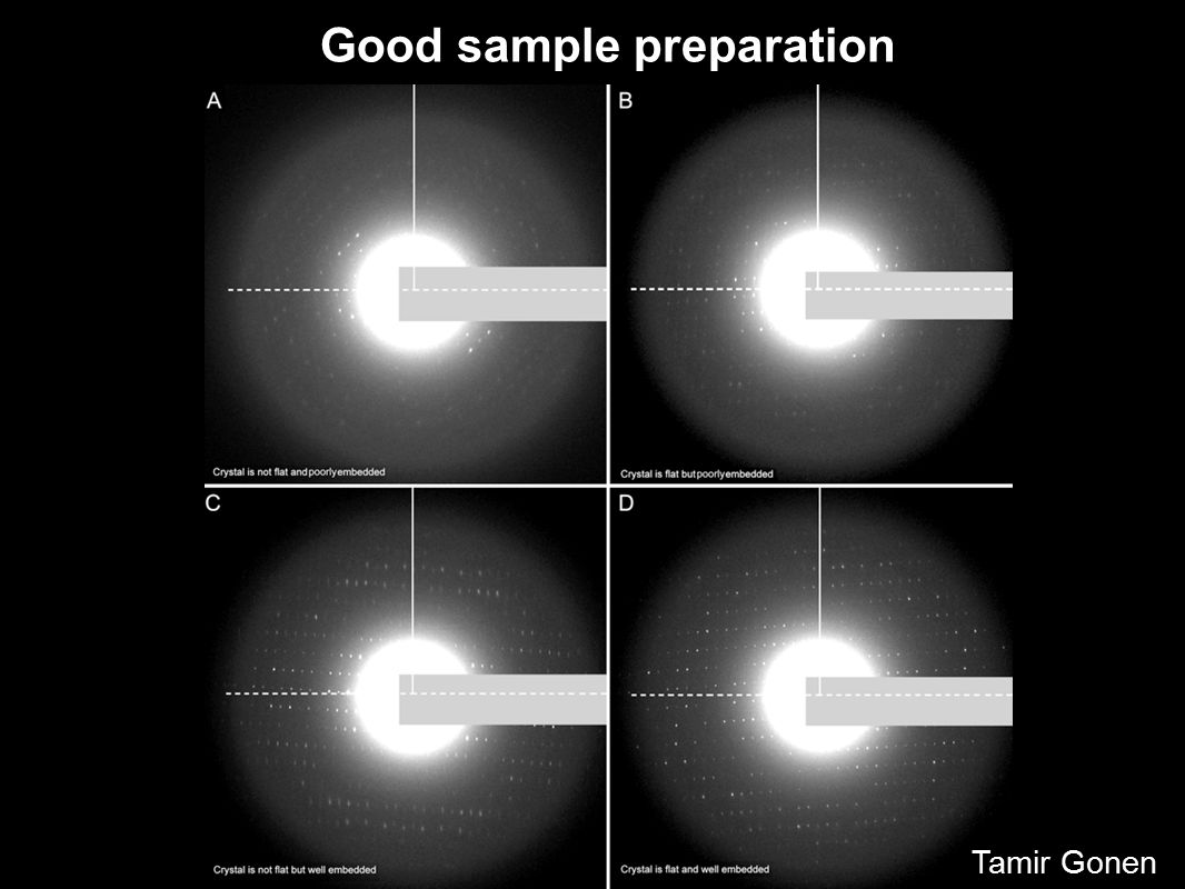 Good sample preparation Tamir Gonen