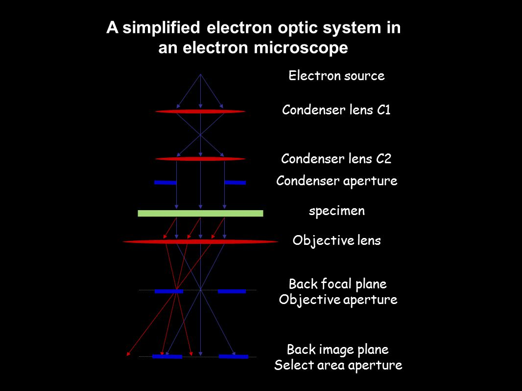 Electron source Condenser lens C1 Condenser lens C2 Condenser aperture specimen Objective lens Back focal plane Objective aperture Back image plane Select area aperture A simplified electron optic system in an electron microscope