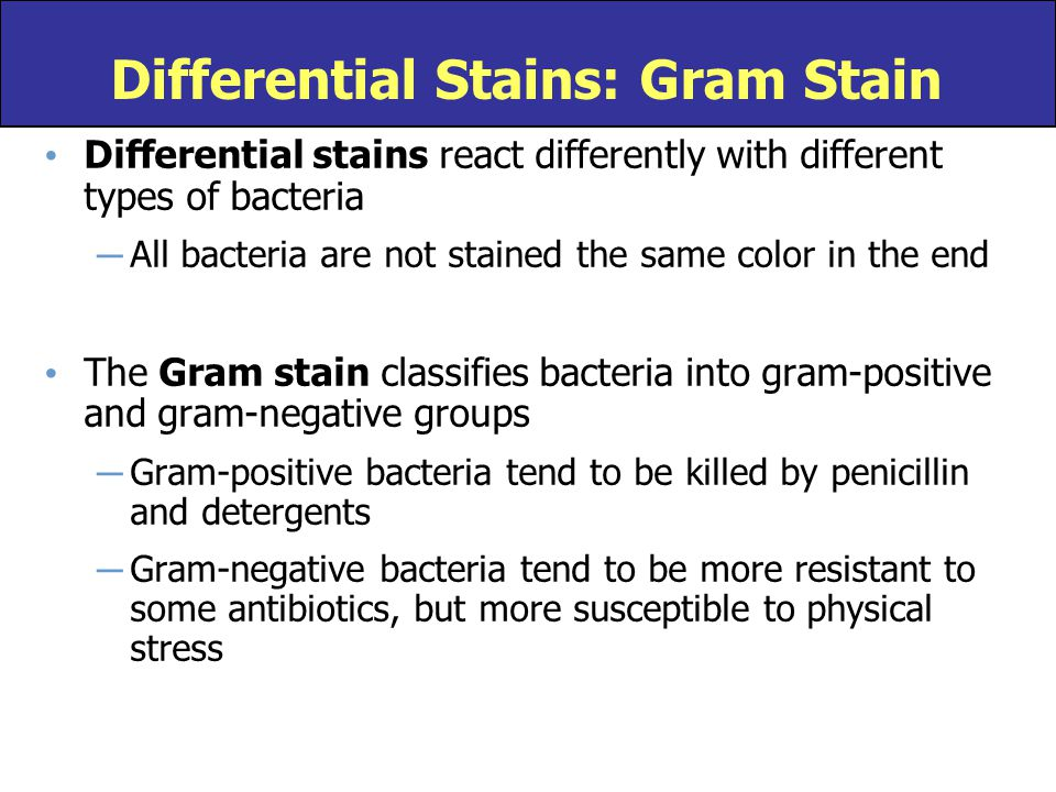 Differential stains react differently with different types of bacteria ─ All bacteria are not stained the same color in the end The Gram stain classif