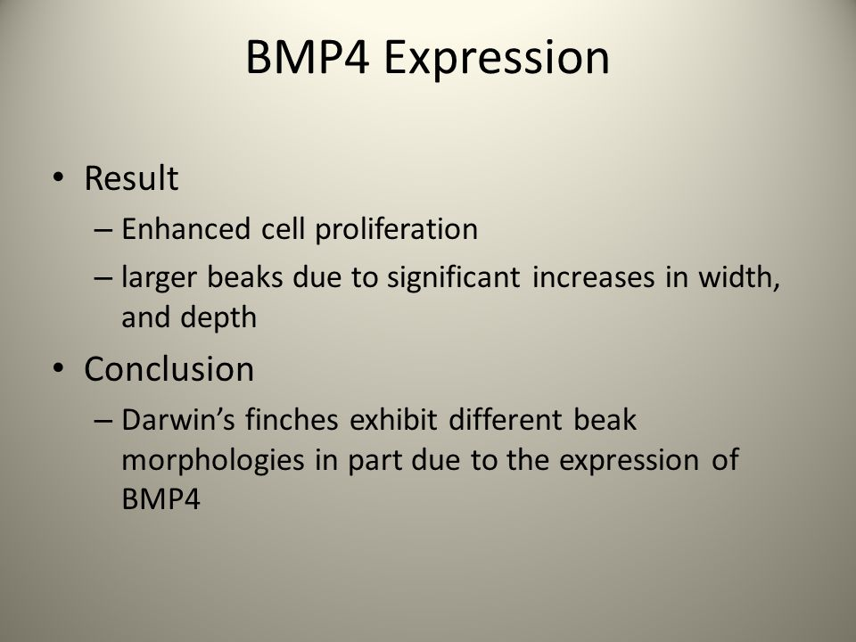 Result – Enhanced cell proliferation – larger beaks due to significant increases in width, and depth Conclusion – Darwin's finches exhibit different beak morphologies in part due to the expression of BMP4 BMP4 Expression