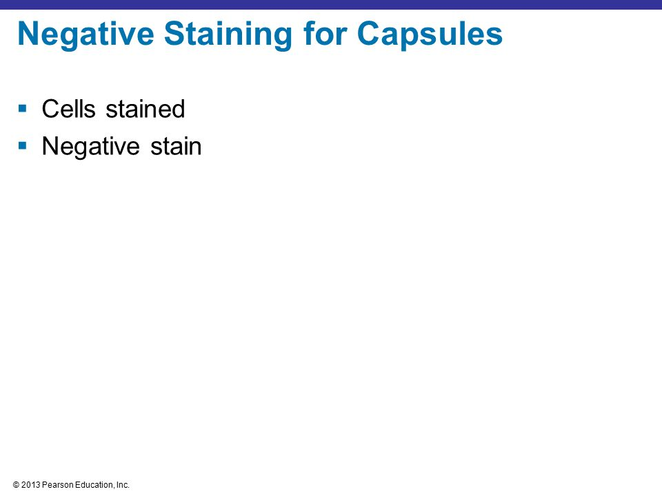 © 2013 Pearson Education, Inc.  Cells stained  Negative stain Negative Staining for Capsules
