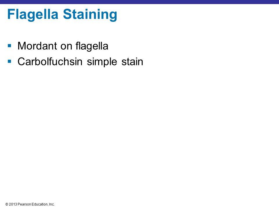 © 2013 Pearson Education, Inc.  Mordant on flagella  Carbolfuchsin simple stain Flagella Staining