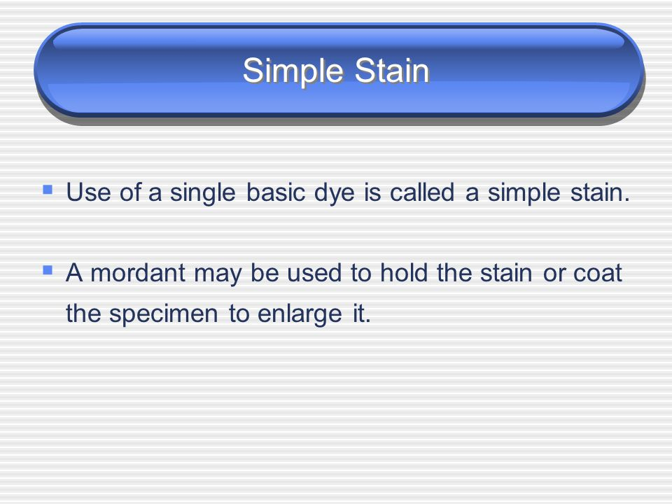 Bacterial Stain Types