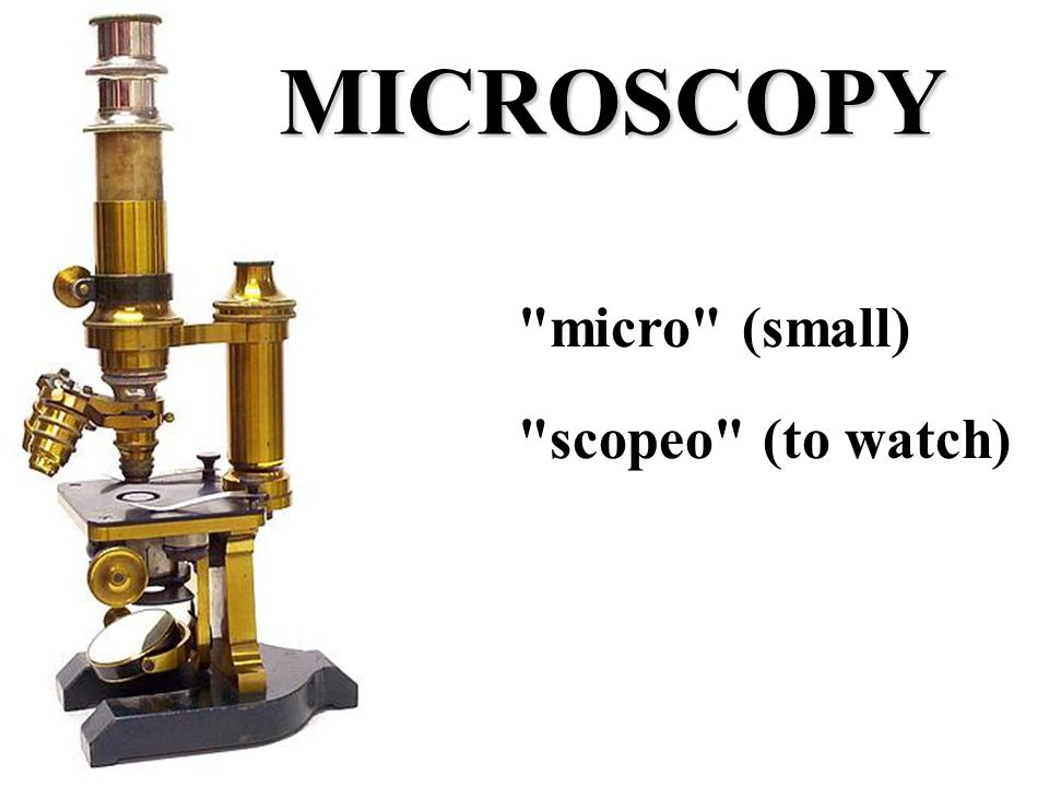 micro (small) scopeo (to watch) MICROSCOPY