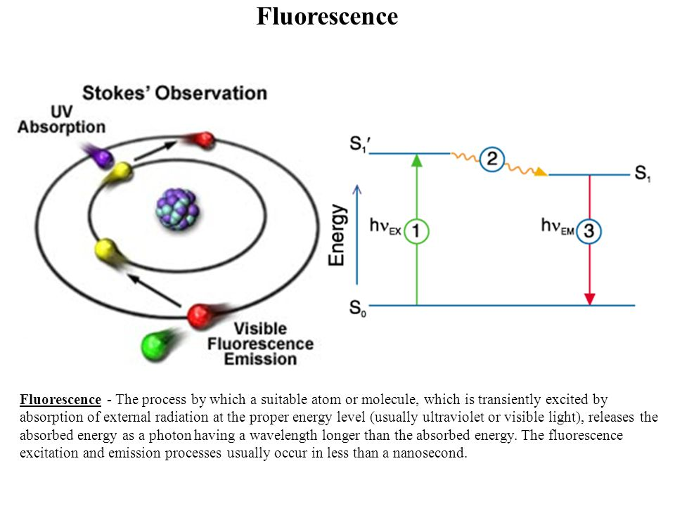 Fluorescence Fluorescence - The process by which a suitable atom or molecule, which is transiently excited by absorption of external radiation at the proper energy level (usually ultraviolet or visible light), releases the absorbed energy as a photon having a wavelength longer than the absorbed energy.