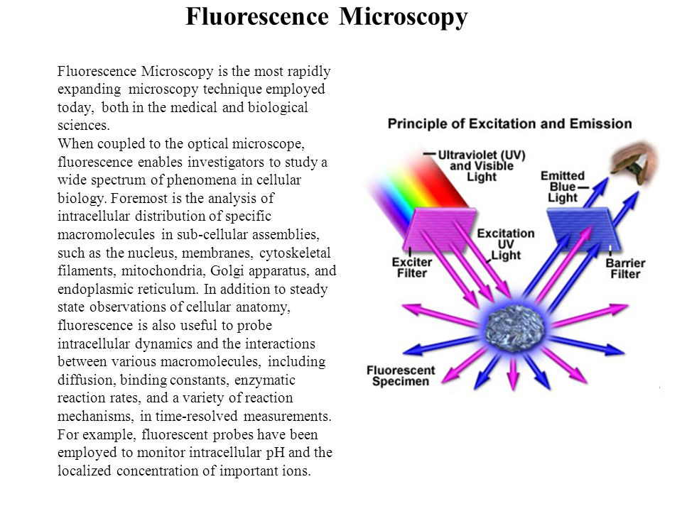 Fluorescence Microscopy is the most rapidly expanding microscopy technique employed today, both in the medical and biological sciences.
