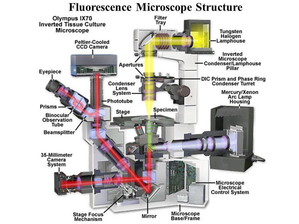 Fluorescence Microscope Structure