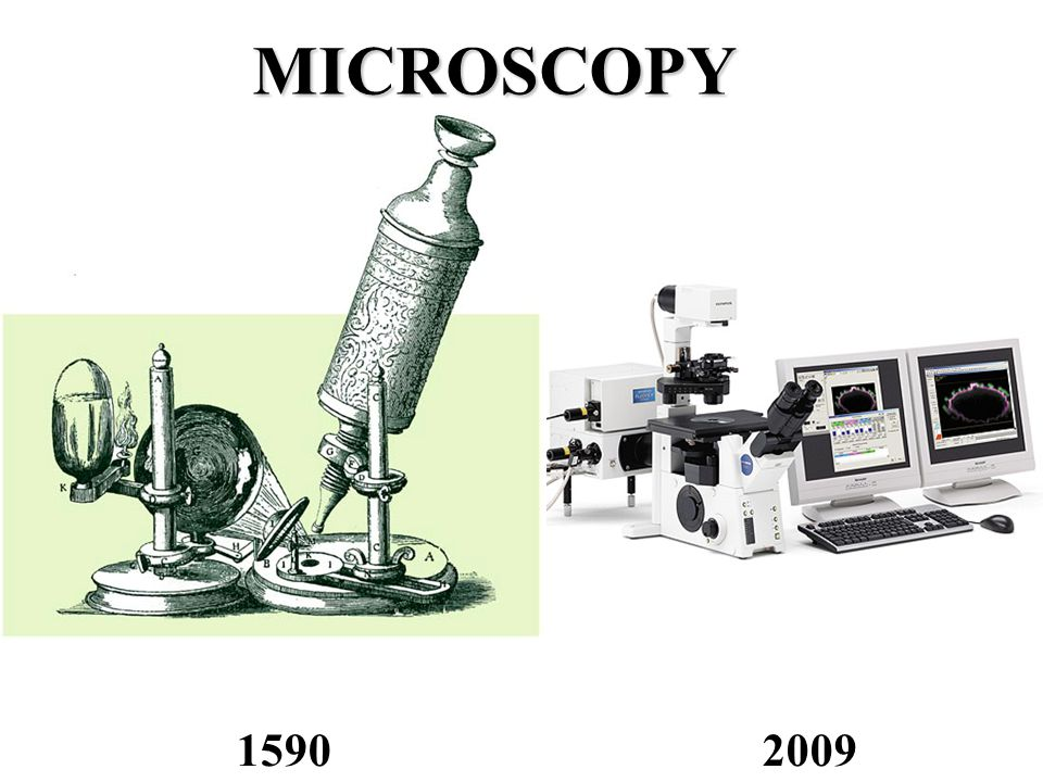 Immunofluorescence Microscopy A targeted molecular species (protein, nucleic acid, membrane, etc.) in a specimen is labeled with a highly specific fluorescent antibody.