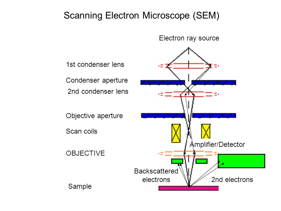 Electron ray source 1st condenser lens Condenser aperture Sample OBJECTIVE Objective aperture 2nd condenser lens Scan coils Scanning Electron Microscope (SEM) Amplifier/Detector 2nd electrons Backscattered electrons