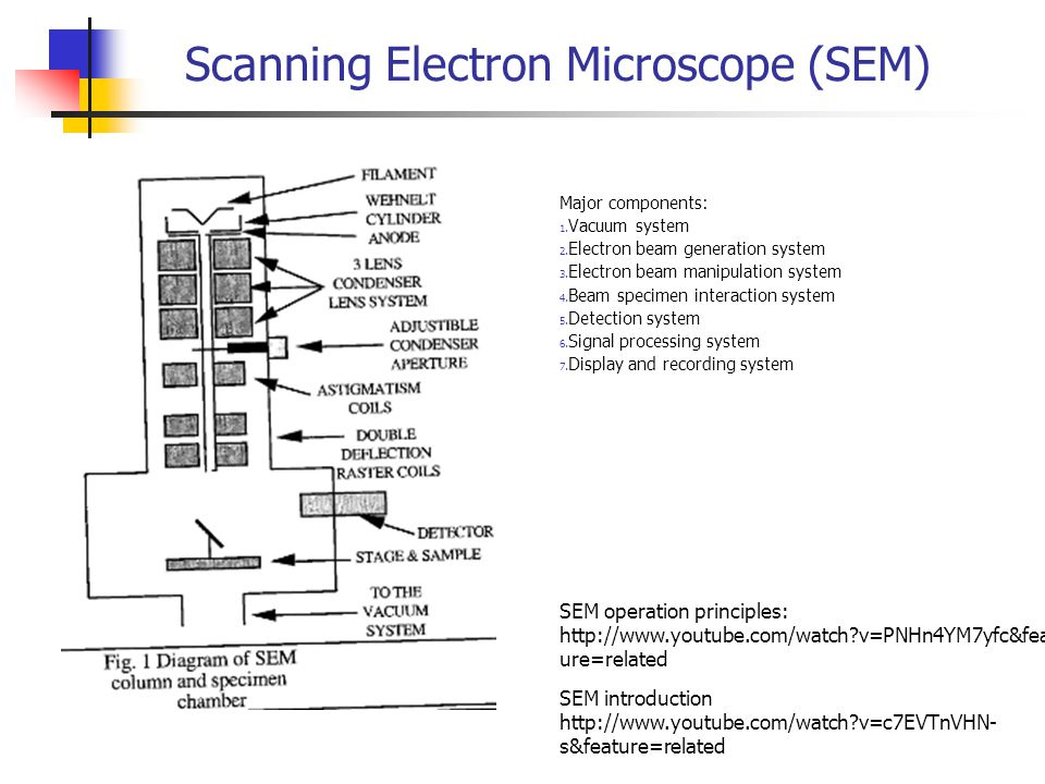 Scanning Electron Microscope (SEM) Major components: 1.
