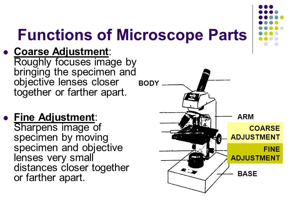 Functions of Microscope Parts Coarse Adjustment: Roughly focuses image by bringing the specimen and objective lenses closer together or farther apart.