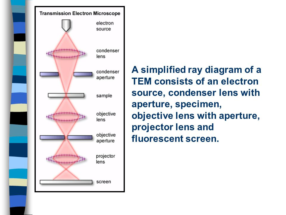 A simplified ray diagram of a TEM consists of an electron source, condenser lens with aperture, specimen, objective lens with aperture, projector lens