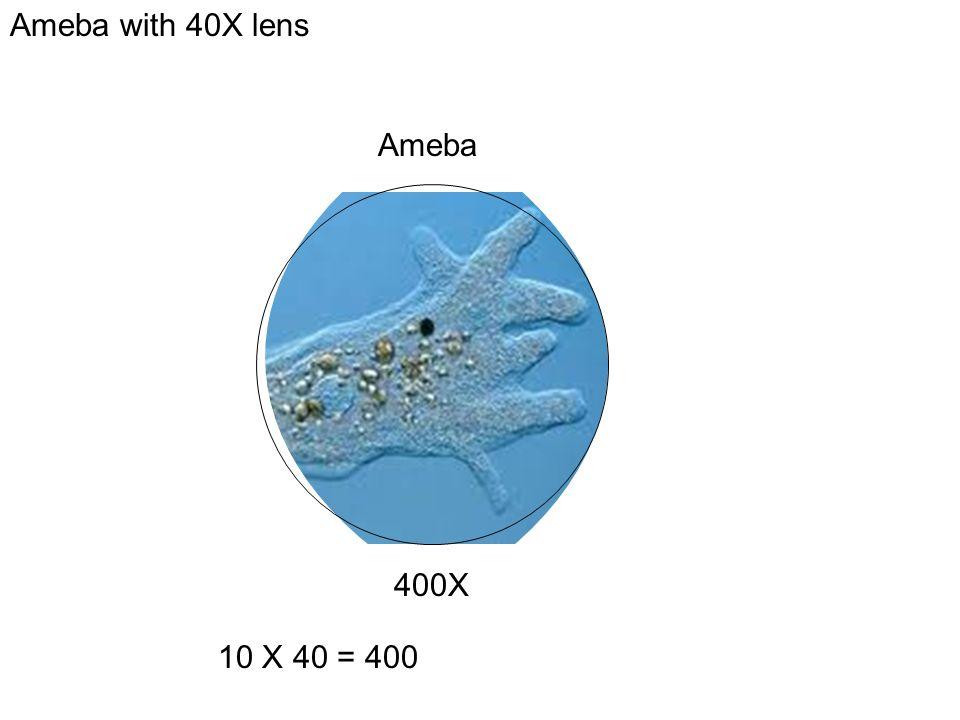 Ameba with 40X lens Ameba 400X 10 X 40 = 400