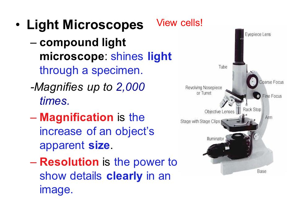 Chapter 1 Light Microscopes –compound light microscope: shines light through a specimen.