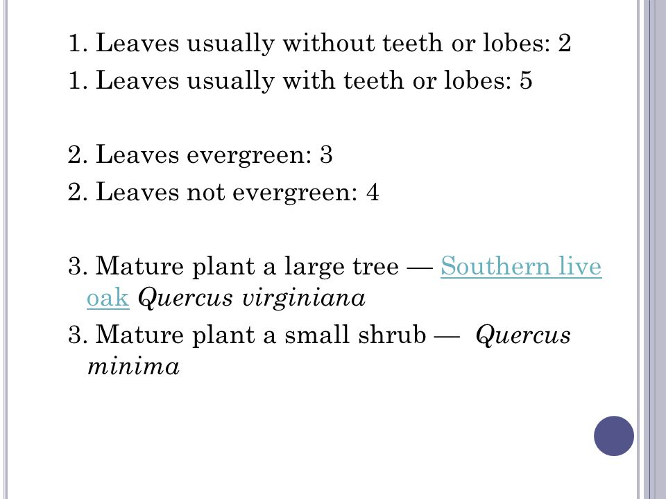 1. Leaves usually without teeth or lobes: 2 1. Leaves usually with teeth or lobes: 5 2.