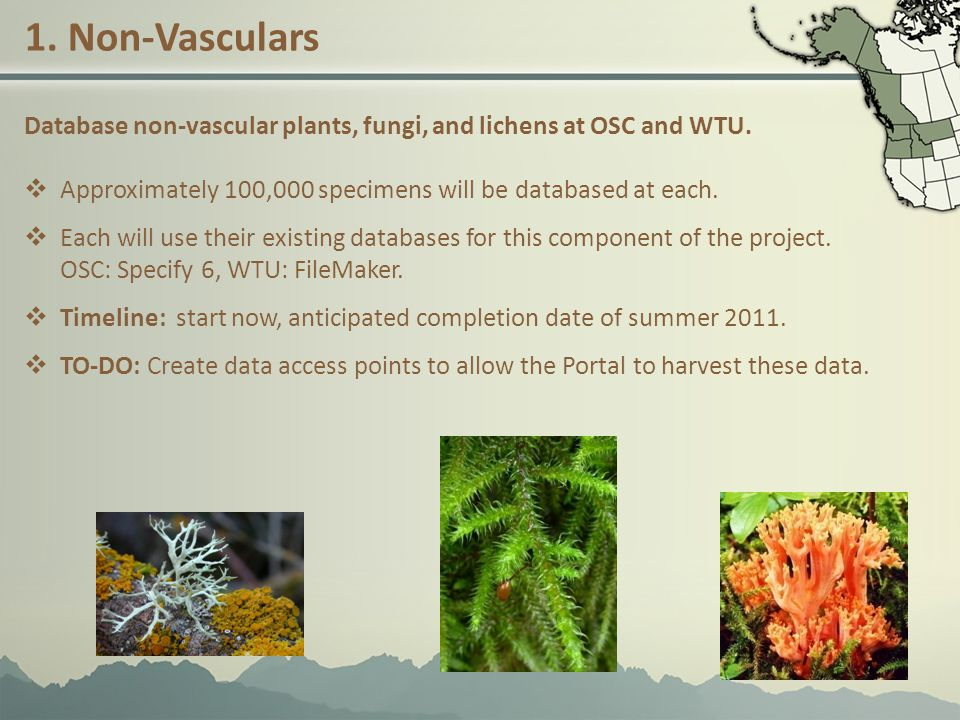 1.Non-Vasculars Database non-vascular plants, fungi, and lichens at OSC and WTU.