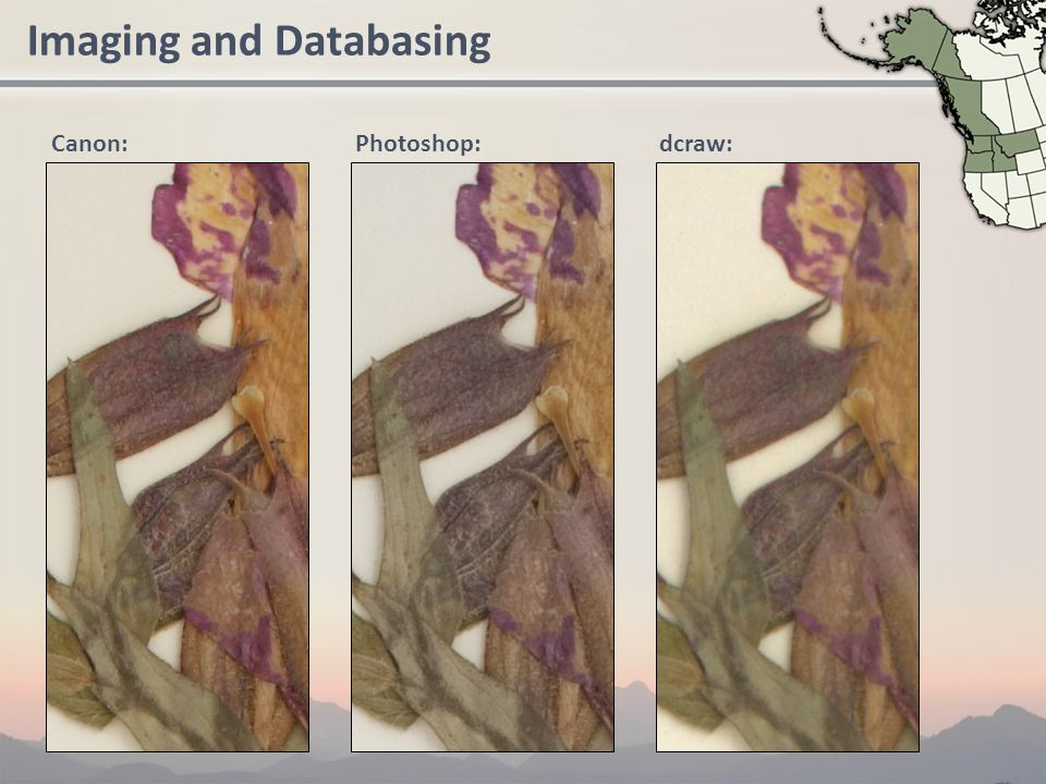 Imaging and Databasing Canon: Photoshop: dcraw:
