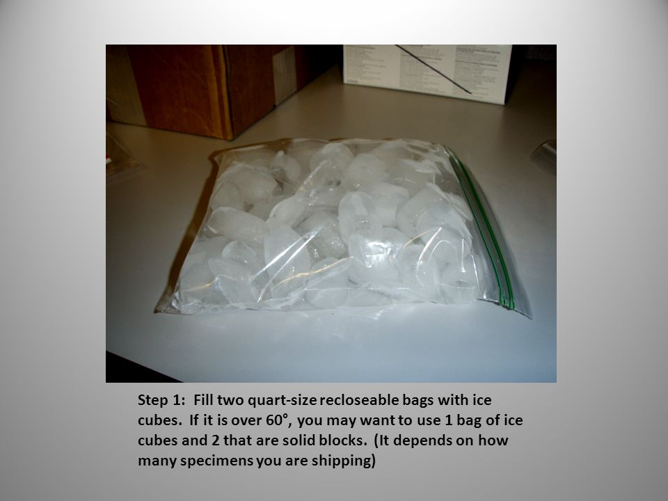 Step 1: Fill two quart-size recloseable bags with ice cubes.