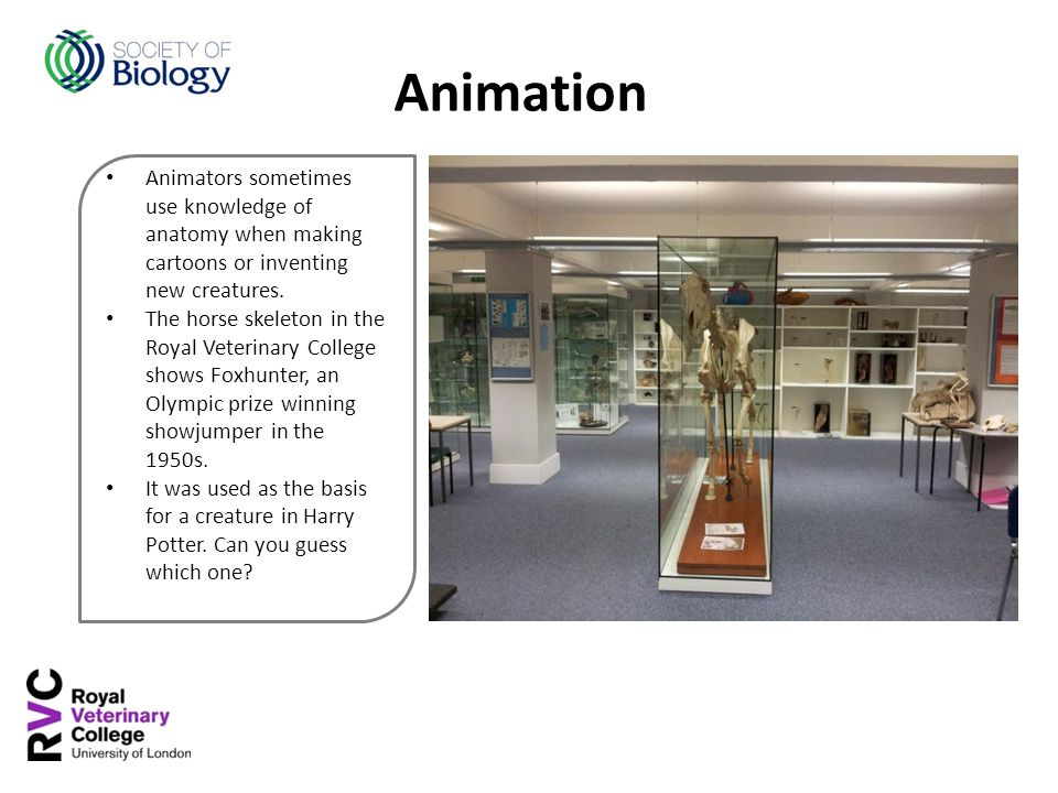 Animators sometimes use knowledge of anatomy when making cartoons or inventing new creatures.