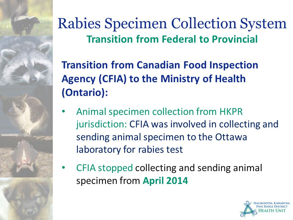 Transition from Canadian Food Inspection Agency (CFIA) to the Ministry of Health (Ontario): Animal specimen collection from HKPR jurisdiction: CFIA was involved in collecting and sending animal specimen to the Ottawa laboratory for rabies test CFIA stopped collecting and sending animal specimen from April 2014 Rabies Specimen Collection System Transition from Federal to Provincial