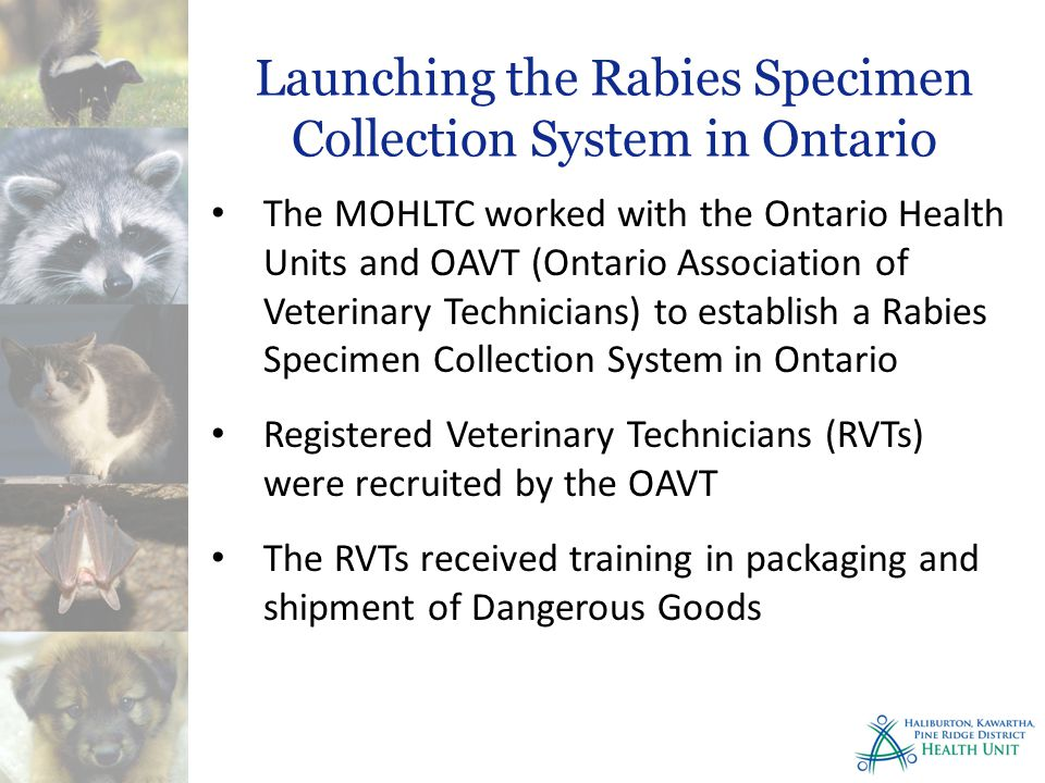 The MOHLTC worked with the Ontario Health Units and OAVT (Ontario Association of Veterinary Technicians) to establish a Rabies Specimen Collection System in Ontario Registered Veterinary Technicians (RVTs) were recruited by the OAVT The RVTs received training in packaging and shipment of Dangerous Goods Launching the Rabies Specimen Collection System in Ontario