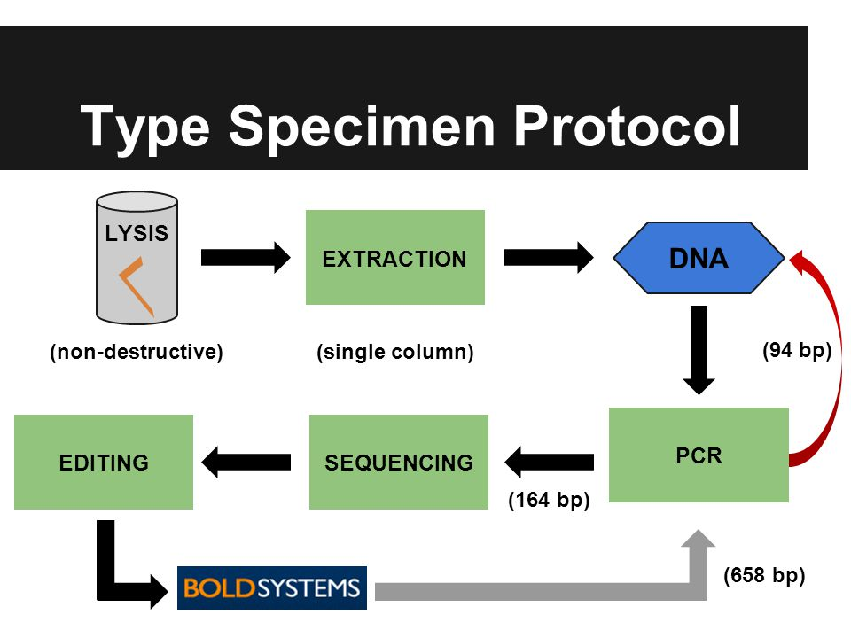 Type Specimen Protocol LYSIS EXTRACTION DNA (non-destructive)(single column) PCR SEQUENCING EDITING (164 bp) (94 bp) (658 bp)