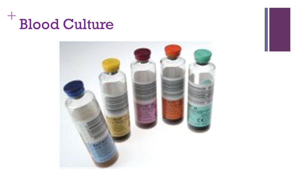 + Blood Culture