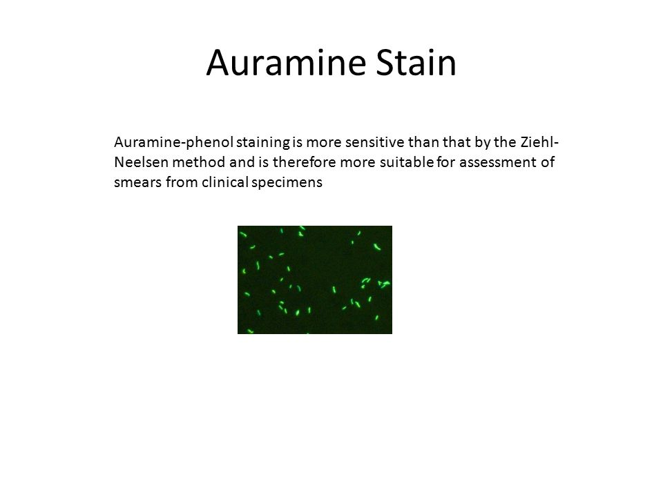 Auramine Stain Auramine-phenol staining is more sensitive than that by the Ziehl- Neelsen method and is therefore more suitable for assessment of smea