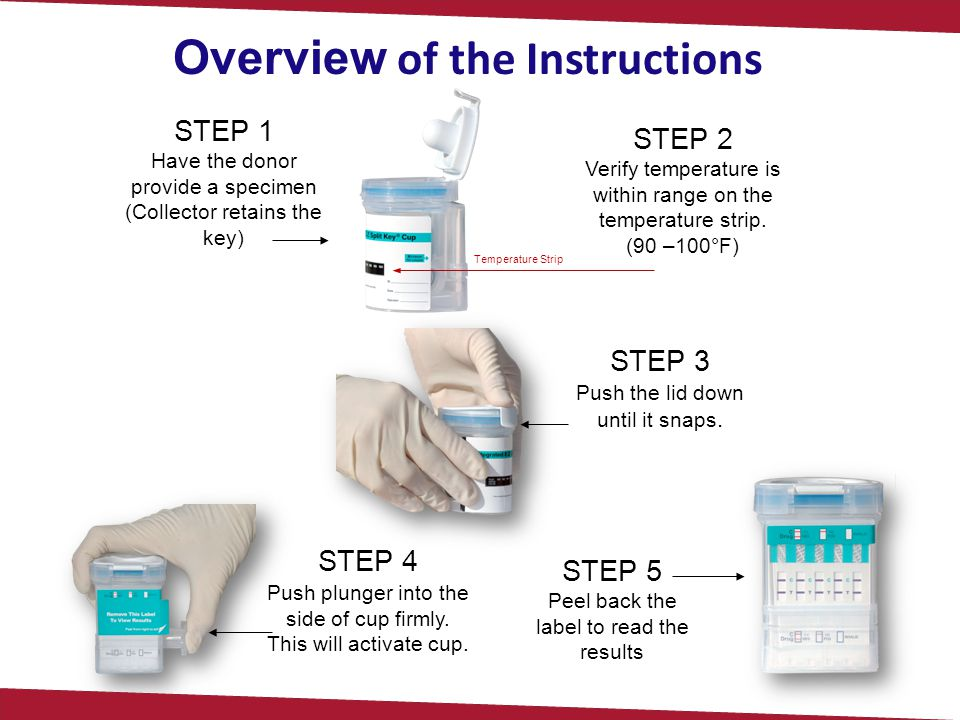 Overview of the Instructions STEP 1 Have the donor provide a specimen (Collector retains the key) STEP 2 Verify temperature is within range on the tem
