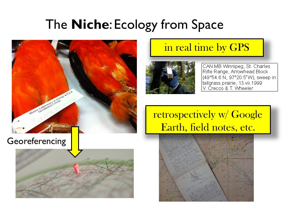 The Niche: Ecology from Space Georeferencing in real time by GPS retrospectively w/ Google Earth, field notes, etc.
